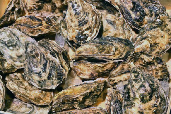 牡蠣サプリ ランキング