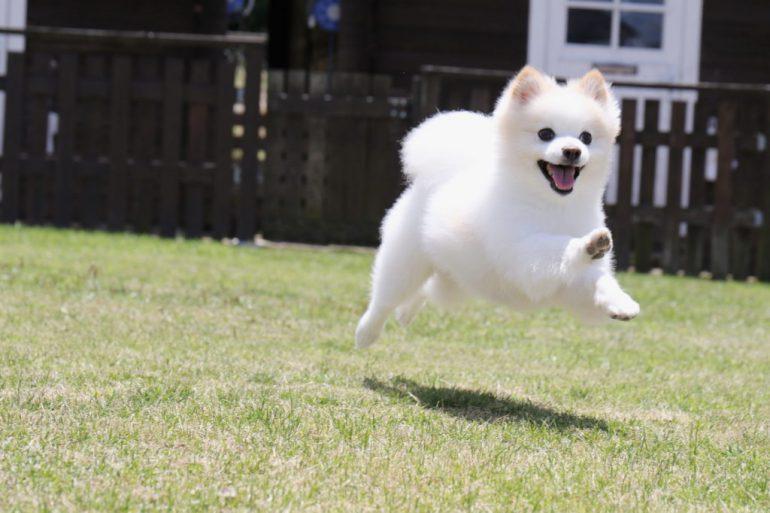 愛犬の健康を考えるなら「ブッチ・ジャパン」の犬用特別トライアルセットを!